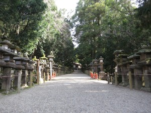 Mossy walkway