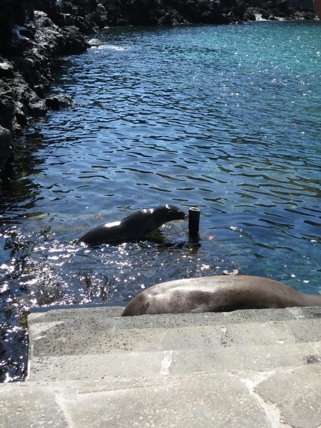 Sea lions hogging the jetty
